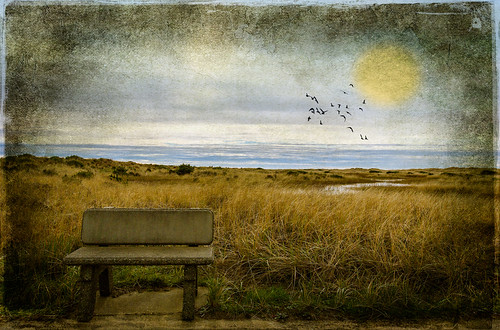 texture beach bench oceanshores birdbrush lenabemanna