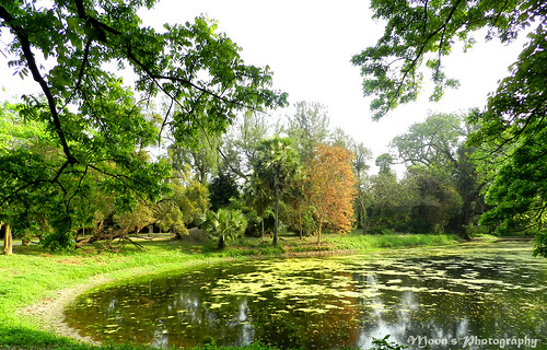 Green foliages of early summer - Shibpur Botanical Garden   by moon@footlooseforever.com
