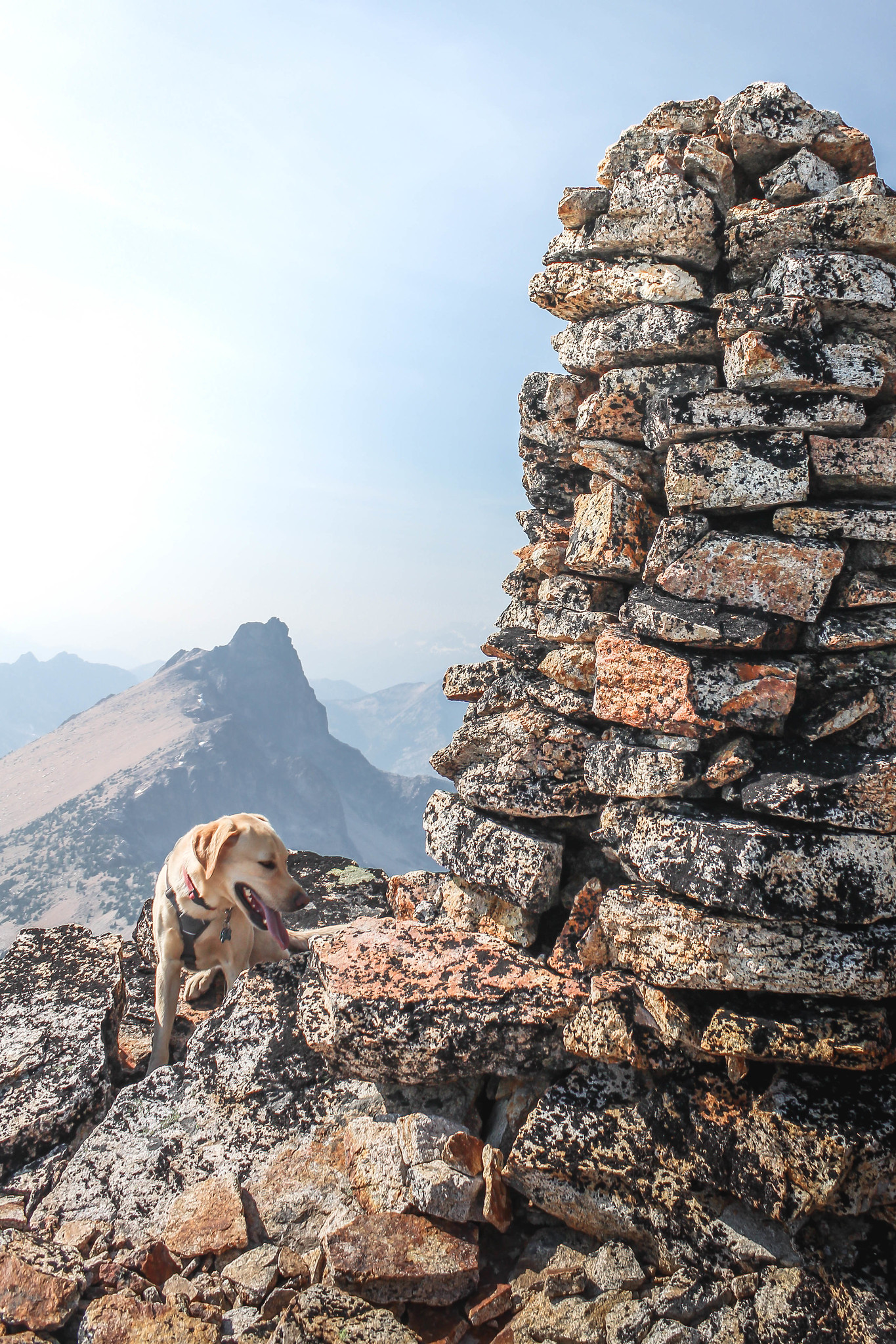 Summit dogs on Tower Mountain