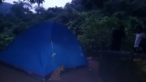 Puppies biting camp | by wanderingjatin