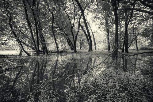 morning monochrome landscape blackwhite testshot desplainesriver canonefs1022 potawatomiwoods canoneosdmarkii