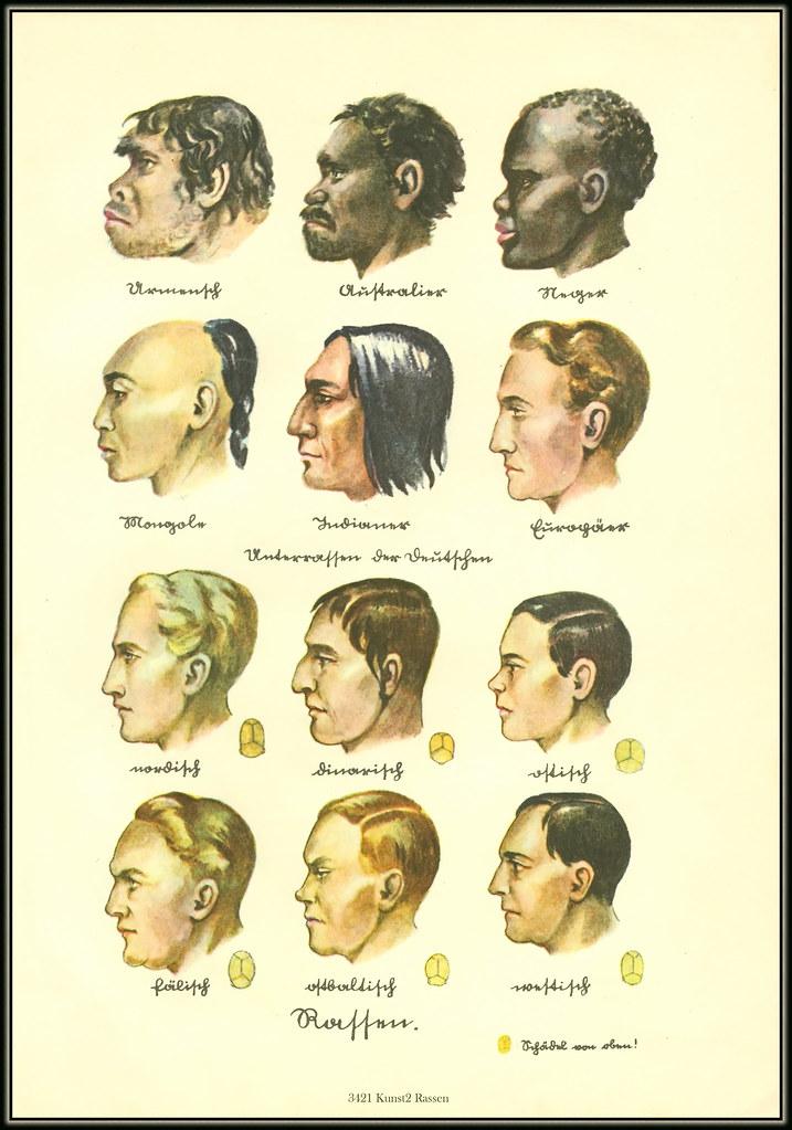 Dinarische rasse