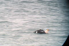 King Eider, St. Catharine's Marina, ON