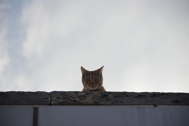 TSA Cat