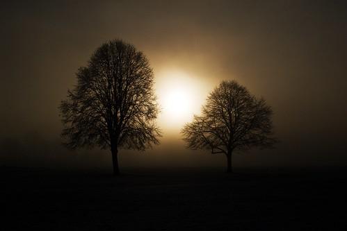trees mist fog