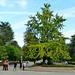 Roteiro por Compostela. Polos parques e xardíns de Compostela - 18/10/2011