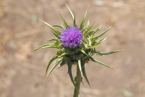california sycamoretrail kaweahoakspreserve