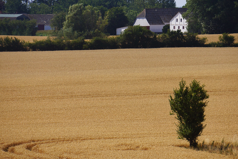 Kaedeby-Haver-2014-07-24 (27)