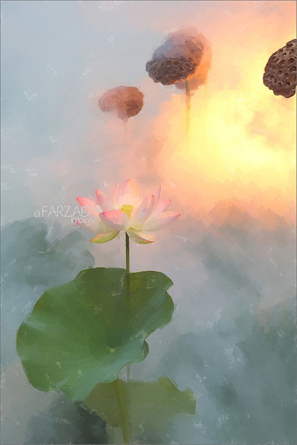 Lotus Flower Paintings/ images using Akvis Oil Paint Filter