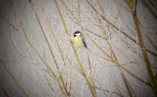 Hampton bird