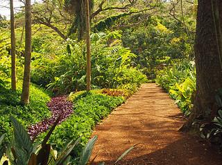 McBryde - Allerton Gardens -Joe 20 | by KathyCat102