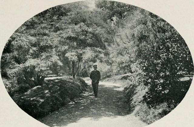 """Image from page 94 of """"El Jardín botánico de Buenos Aires"""" (1910)"""