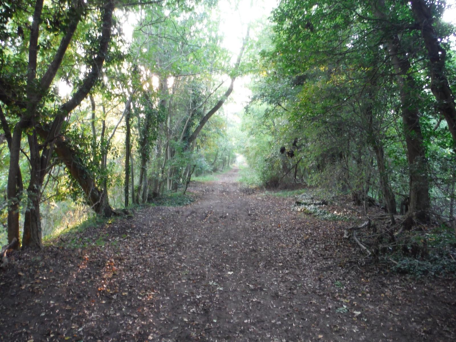 Dismantled Railway Line, Maldon to South Woodham Ferrers SWC Walk 159 South Woodham Ferrers to North Fambridge