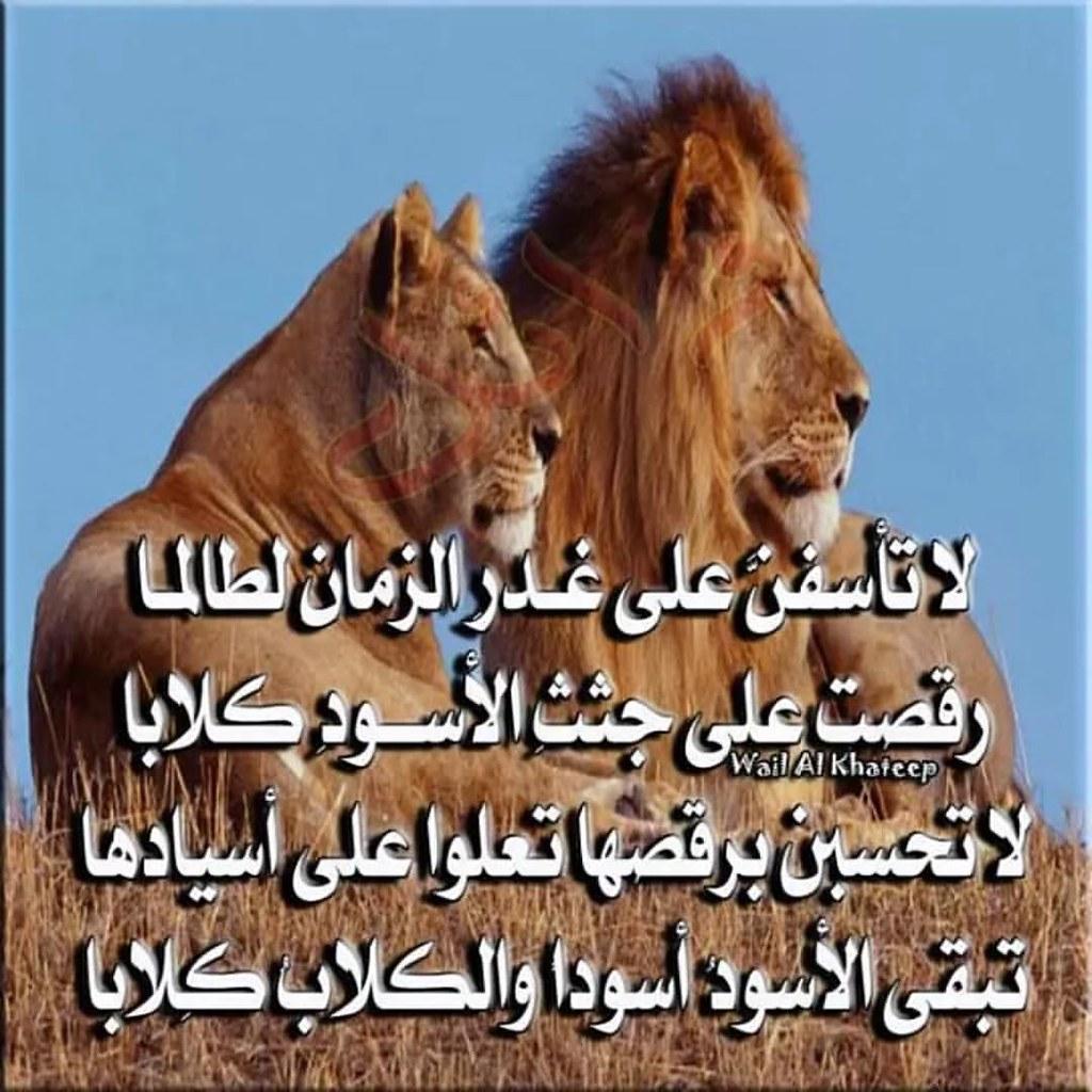 قالها الإمام الشافعي رحمه الله وهي لا تأسفن على غدر الز Flickr