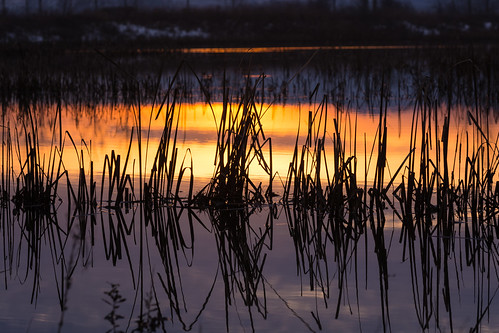 oregon pacificnorthwest fernhillwetlands forestgrove reflections water sunset abstract grass winter