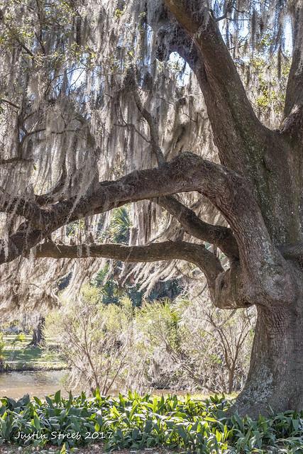 New Orleans City Park 2_