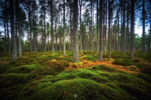 bracketedexposure canon forest hdr landscape leefilters longexposure moss nature perthshire pinetrees scotland trees winter woodland