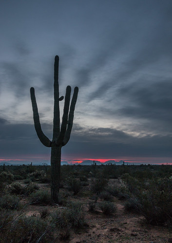 cactus phoenix sunrise arizona unitedstates