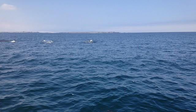 Isla Damas, Chile.