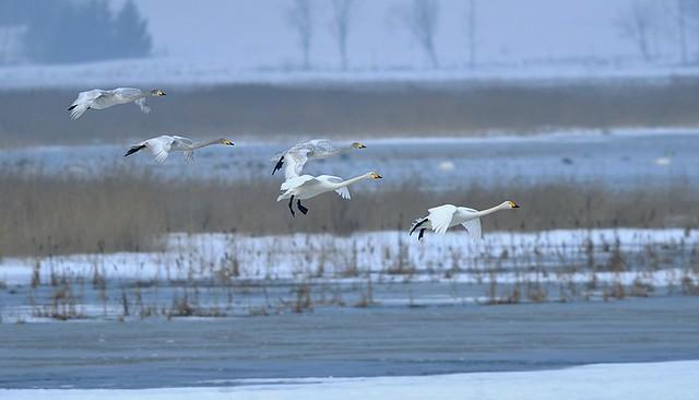Sweden, Winter landing