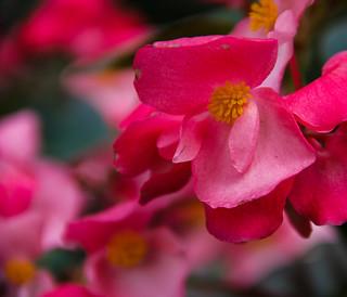 flower | by WalrusTexas