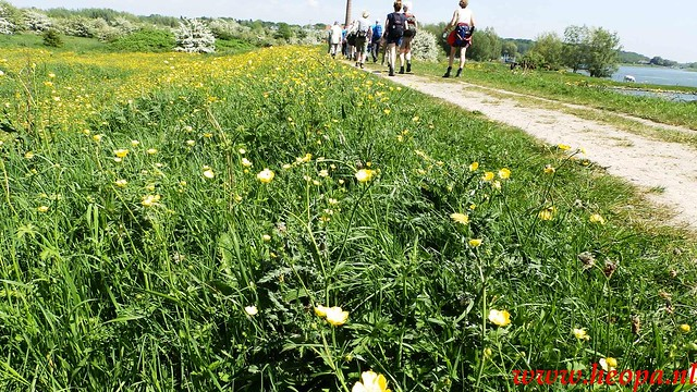 2016-05-11   Rhenen 25 Km (91)