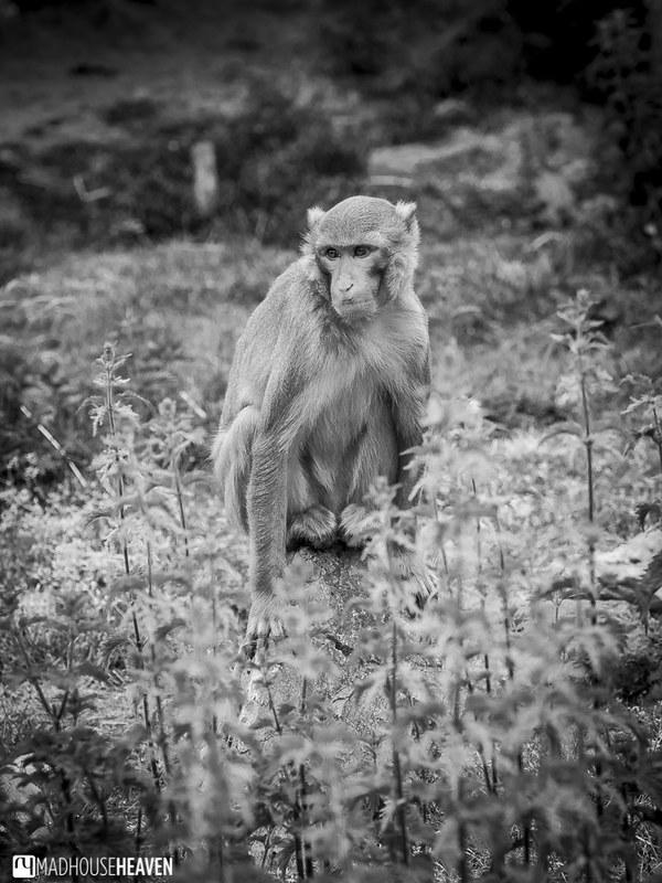 Safaripark Beekse Bergen - 0331