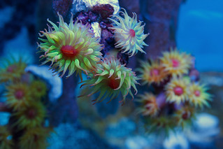 top down8 | by mark_mikina