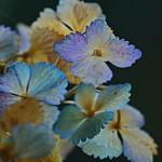 flower 213