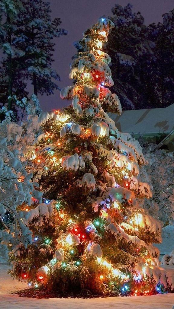 Christmas Tree Wallpaper iphone 6 Plus