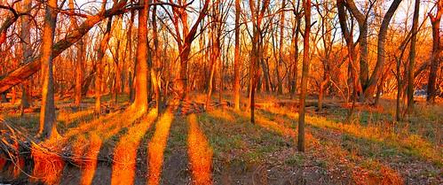 usa colour art beautiful forest photo illinois nikon colours arty artistic dante creative colourful nikkor 28300mm d610 paultrottier