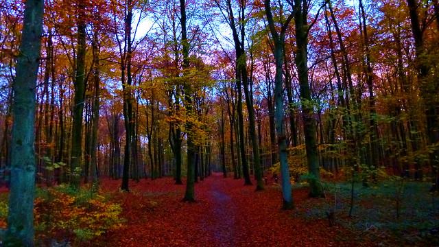 Dusk November Forest
