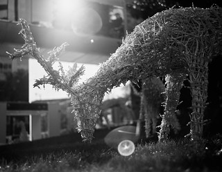James Center Reindeer | by BlueGoo Studios