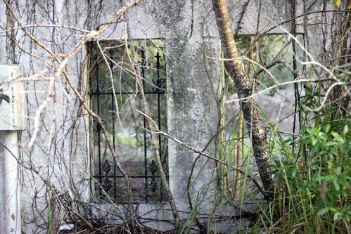 wild abandoned animals monkey coast spring creepy horrormovie apes monkeysanctuary primatesanctuary harthmemorialsanctuaryforprimates hillfloridaflflaoldclosedshut downrichard elzeyelzeysun