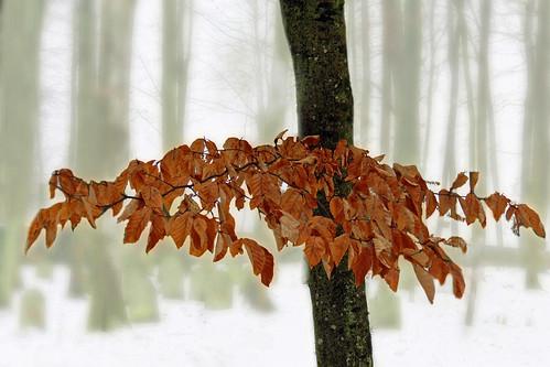 Freies Thema    Farbe Herbstwald Bild 1 Reinhold