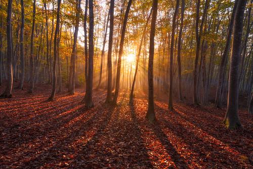 autumn trees japan forest sunrise niigata tokamachi 2014 新潟 日の出 niigataprefecture 美人林 bijinbayashi