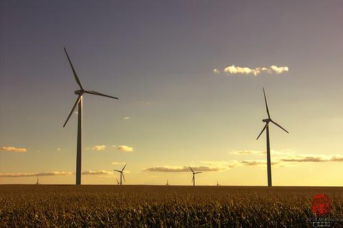 minnesota corn cornfield wind farm crop mn turbine windfarm