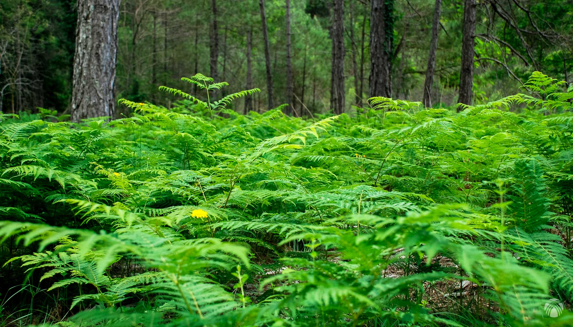 El gran verde