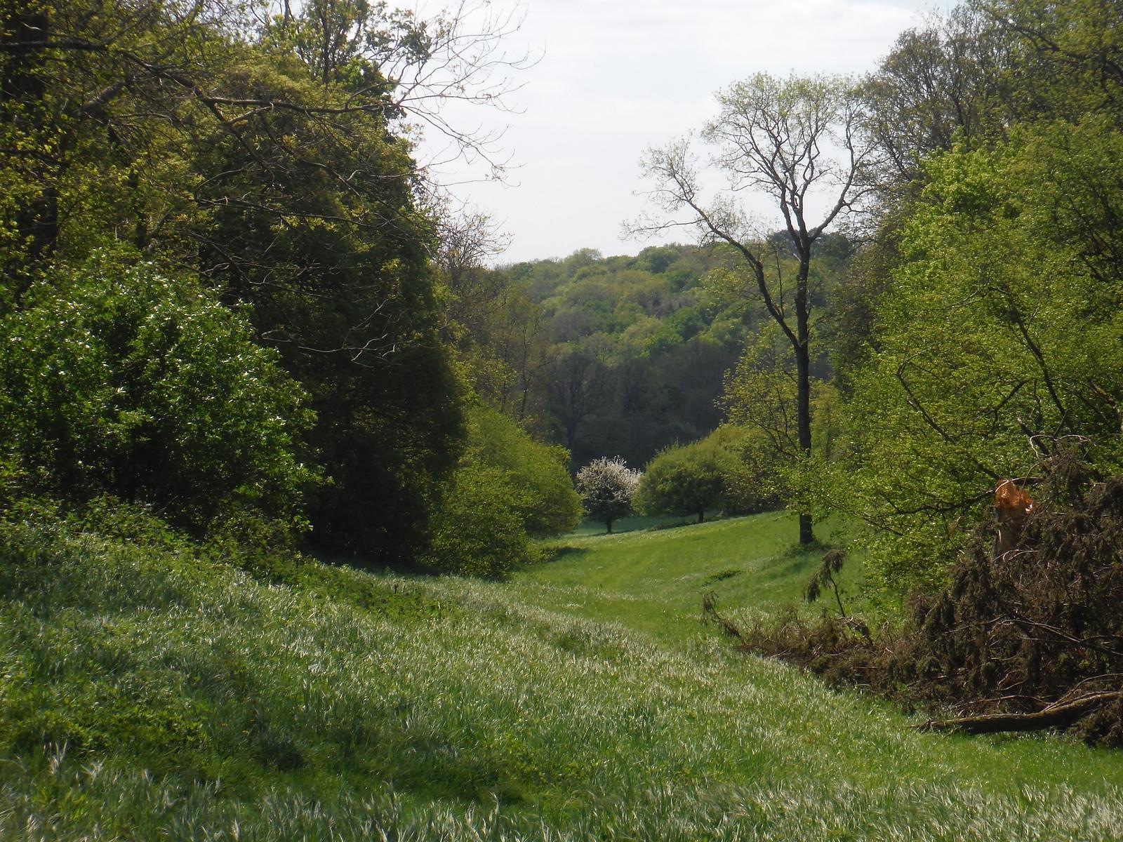 Side Valley near Up Marden SWC Walk Rowlands Castle Circular