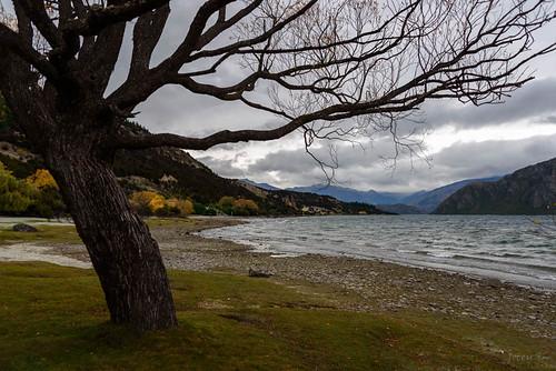 autumn trees newzealand sky mountains beach clouds autumncolours southisland centralotago wanaka lakewanaka tripdownsouth wanakaoutlet startofthecluthariver