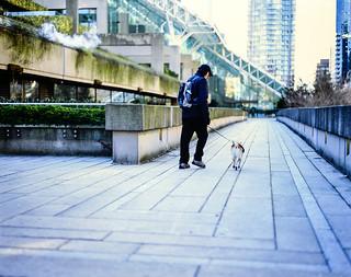 Walking His Dog Pentax 67ii Pentax 105mm F 2 4 Smc F 4