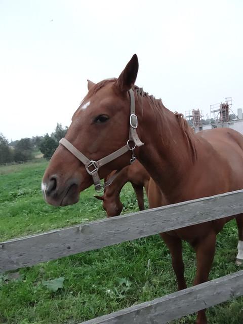 Pferd-2556