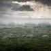 Kenya's Arabuko Sokoke forest, under threat-5144 by jeromestarkey