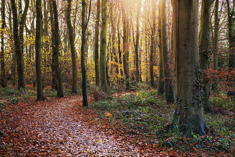 Norfolk Autumn