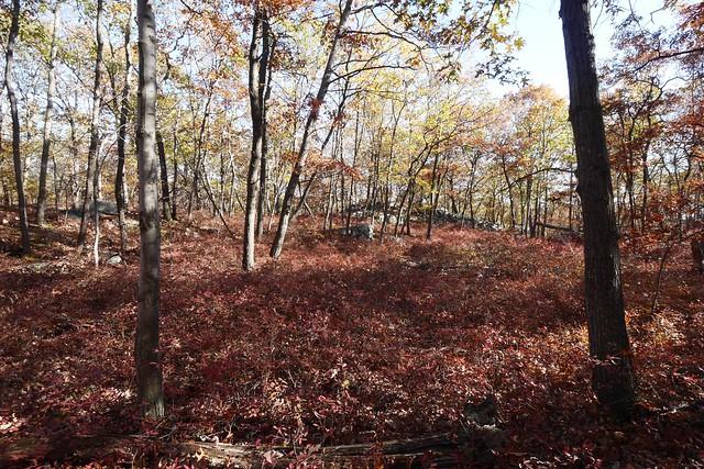 日, 2014-10-12 15:34 - Sterling Forest State Park