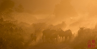 The Great Migration at sunset | by DragonSpeed
