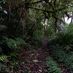 01 Viajfilos en Panama. Sendero Quetzal 39