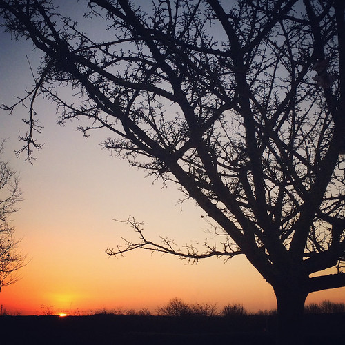 morning sky sun sunlight tree nature silhouette sunrise landscape branches lincolnshire lincoln iphone iphone5s