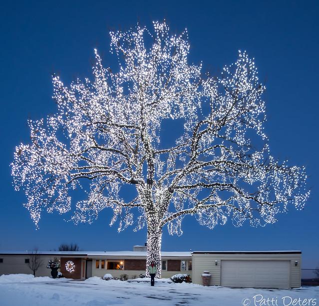Giant Lighted Oak Tree