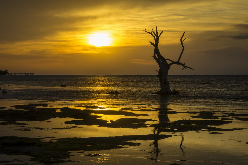 Dead Tree Sun   Big Pine Key, Florida USA   Thomas   Flickr